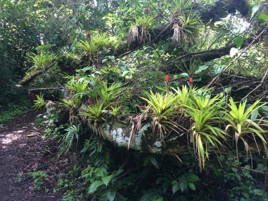 Ecolodge San Luis : Property
