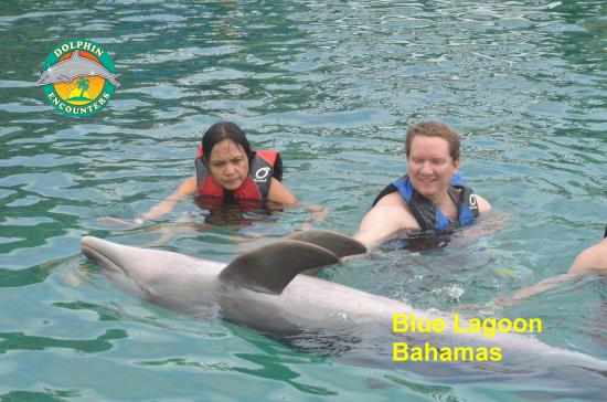 Dolphin Close Encounter: photo2.jpg