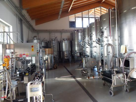 L'Isola del Sasso : where the wine is made