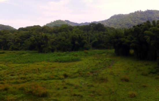 Konark Homestay: Swampland and the Bamboo forest behind the homestay