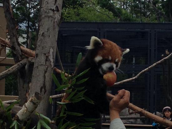 がんばれ~! - Picture of Maruyama Zoo, Sapporo - TripAdvisor