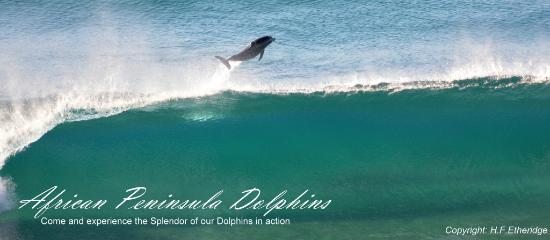 African Peninsula Guest House: View the Dolphins from your deck or our Restaurant Deck