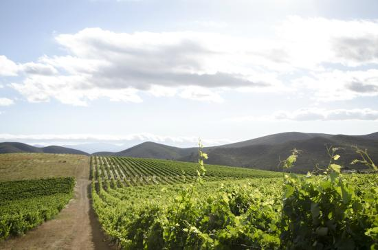 Bushmanspad Estate : Scienic walks in our vineyard