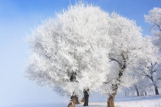 Wusong Island: ICED TREE