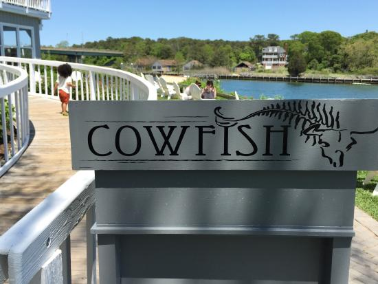 Cowfish: photo1.jpg