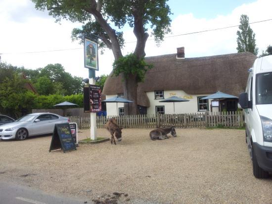 Exterior 2 Picture Of The Royal Oak Pub Fordingbridge TripAdvisor