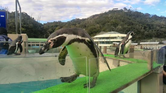 """至近距離 - Picture of Shimoda Aquarium, ShimodaPhoto: """"至近距離"""""""