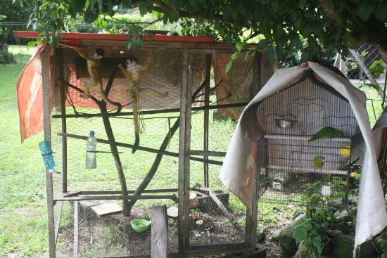 Paso Canoas, Panama: monkeys and birds in cages