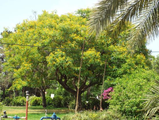 Nes Ammim, Israel: Зелень зелененькая