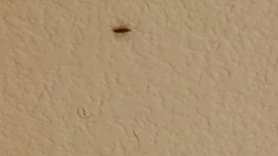 Days Inn Woodland: Roach infested