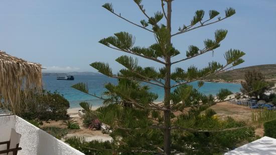 Arokaria Beach Studios: The Arokaria tree that gave the studios its name