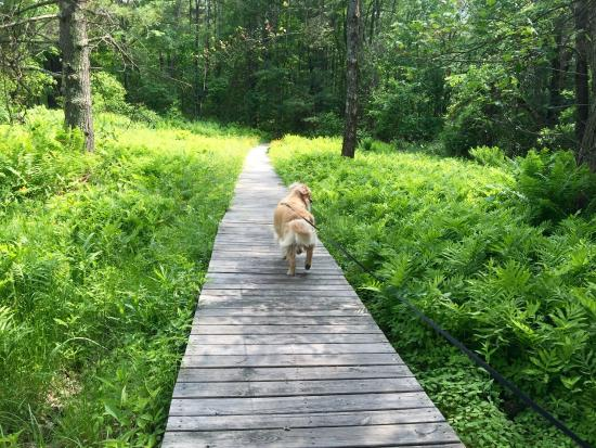 Fruitlands Museum : Walking around the trails.