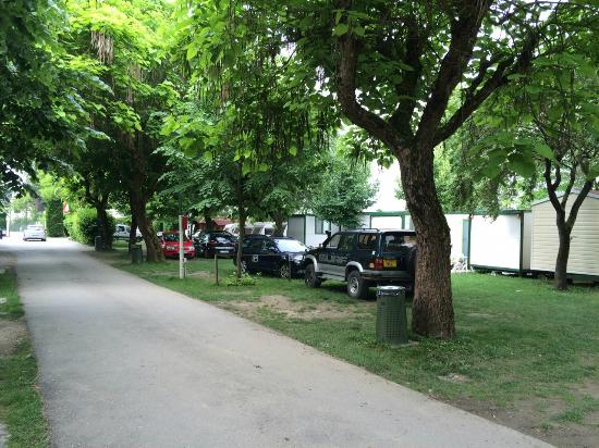 Camping Serenissima : Common road in the campus