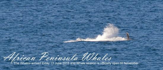 African Peninsula Guest House: Whale season June to November