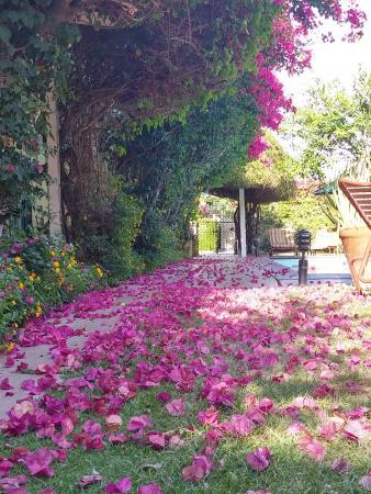 Casa Cody: garden