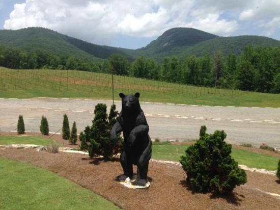 Yonah Mountain Vineyards: Yonah is the Cherokee word for Bear; Yonah Mountain in the background.