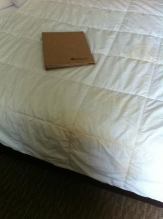 Hilton Garden Inn San Bernardino: comforter 2