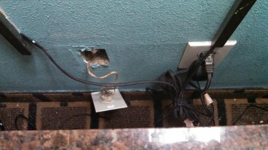 سوبر 8 جاسبر آل: hanging outlet, which I THINK was from the phone jack.