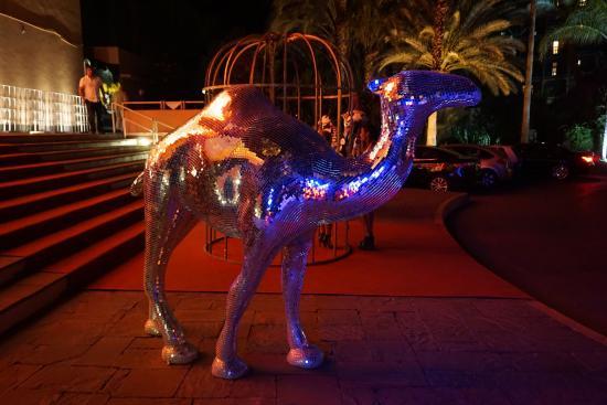 Casino de Marrakech: Front steps of casino