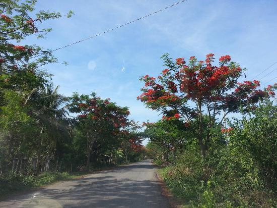 Roluos, Camboja: Battambang