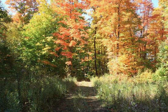 Wildwood Bed & Breakfast: woods trail in Autumn