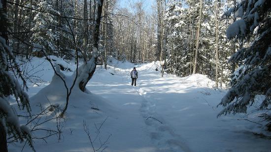 Wildwood Bed & Breakfast: snowshoeing