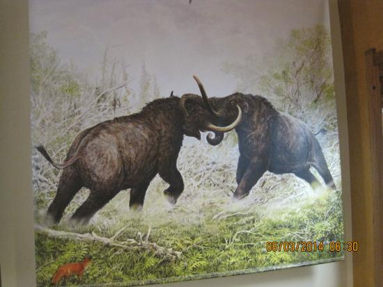 University of Wyoming Geological Museum: Woolly Mammals