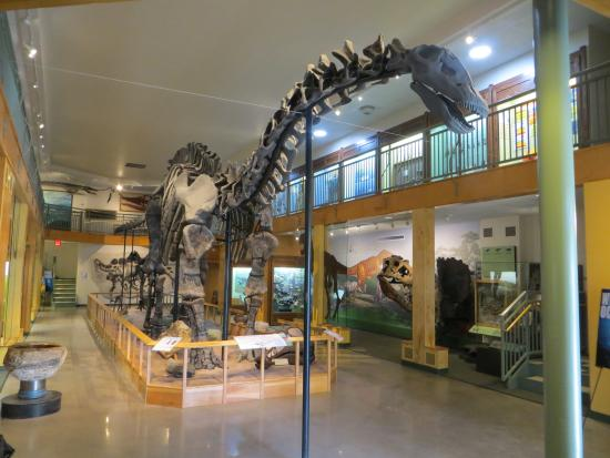 University of Wyoming Geological Museum: Large Dinosaur