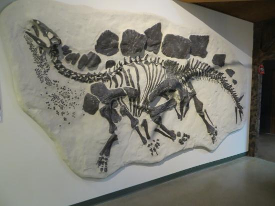 University of Wyoming Geological Museum: One in Plaster.