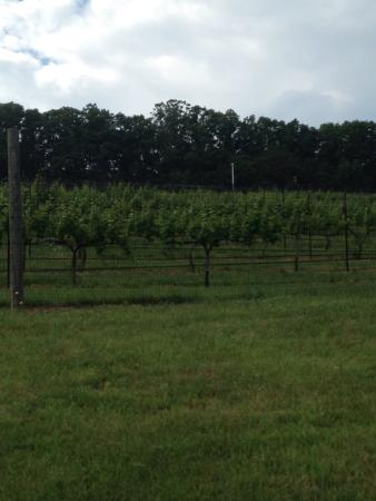 Foto de West Wind Farm Vineyard & Winery