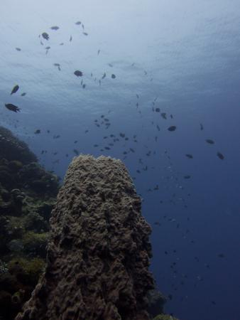 Cakalang Bunaken: The clear water with good vis