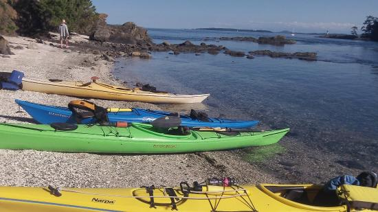 A Paddle in the Park Kayaking : ventured off to the white shell beach for a little break! So beautiful.