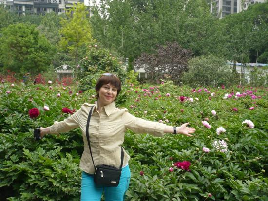Luoyang International Peony Garden : сад пионов