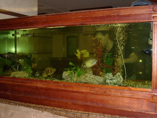 Vyborg Hotel: аквариумы