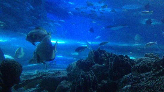 view from the glass tunnel. - Picture of Underwater World Pattaya, Bang Lamun...