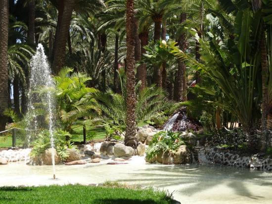 Jardin Picture Of Hotel Riu Palace Oasis Maspalomas Tripadvisor