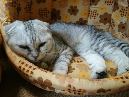 猫のひなたぼっこ