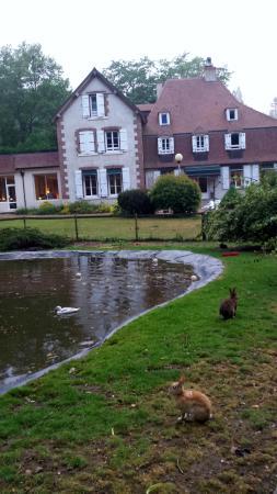 Hotel le Tronçais: La marre aux canards et aux lapins
