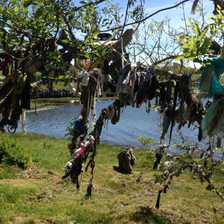 The Abbey Mill: Tree with little crosses and hankies