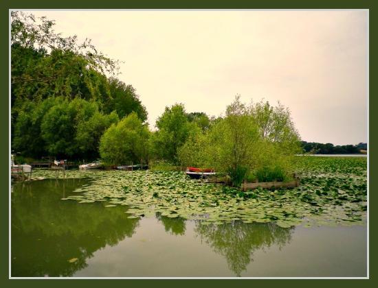 lago di chiusi con ninfee picture of lago di chiusi