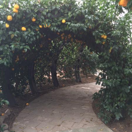 Gigante foto di hesperidarium il giardino degli agrumi - Il giardino degli esperidi ...