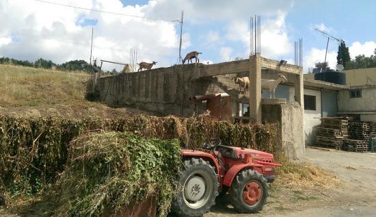 Villa Kerasia: Ziegen, das ist cool, die kennen ja gar nichts