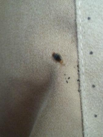 Hilton Garden Inn Beaufort: Bedbugs in the bedskirt, which I found when looking for switch to adjust bed.
