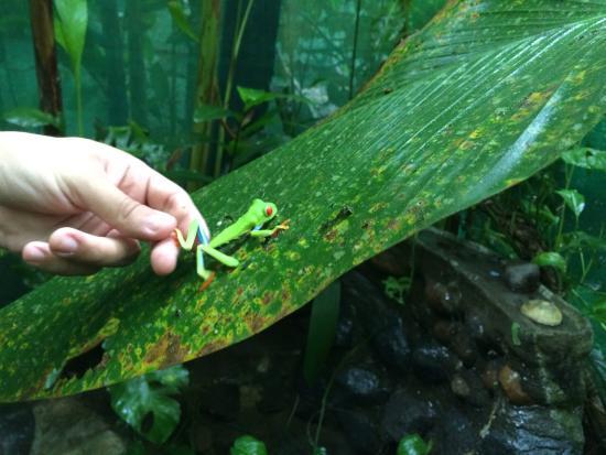Diego Birding & Nature Day Tours: Tree Frog!