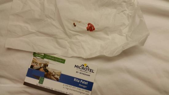 Microtel Inn & Suites by Wyndham Harrisonburg: Bedbugs found and killed by me - room 408