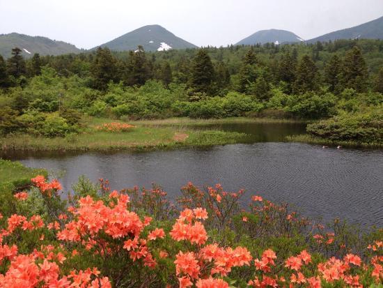Suiren Pond: 睡蓮沼