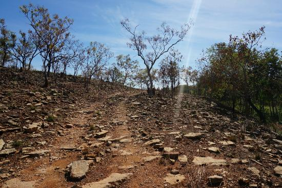 Gregory National Park: A smooth bit of the track