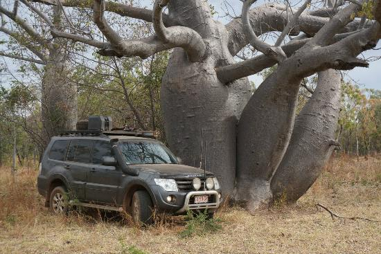 Gregory National Park: Boab vs Pajero