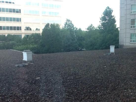 Franklin Marriott Cool Springs: View from #233