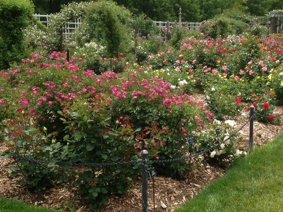 Cerezos picture of brooklyn botanic garden brooklyn tripadvisor for Brooklyn botanical garden tickets